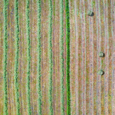 Haymaking, aerial view. Hay bales in one field, rows of recently cut grass in other. La Gandara, Soba Valley, Valles Pasiegos, Cantabria, Spain. May 2019.
