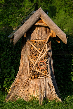 Luxury insect / bug hotel made from tree trunk. Surrey, England, UK. 2018.