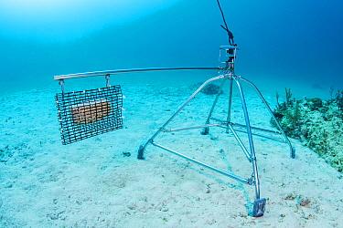 Baited remote underwater video (BRUV) setup by scientists to determine predator abudance. Bahamas. 2017.