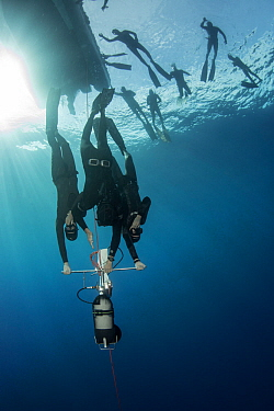 Divers learning to freedive with sled, more divers at surface. Tenerife, Canary Islands. 2015.