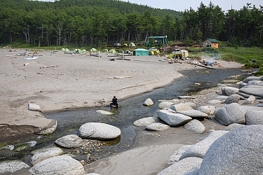 Person in river flowing through beach. Camp with tents in background, gathering to watch yearly congregation of Bowhead whales (Balaena mysticetus). Primorsky Krai, Russia. August 2019.