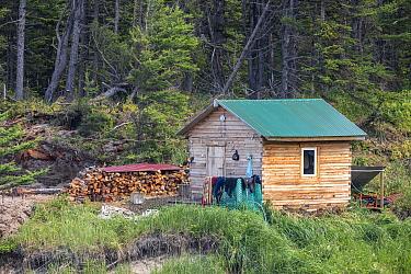 Sauna hut / banja and logpile at camp in Vrangel Bay where Bowhead whale (Balaena mysticetus) congregate every summer. Primorsky Krai, Russia. August 2019.