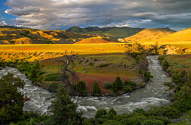 Meander of Gardiner River with grassland and hills in background, in evening light. Yellowstone National Park, Wyoming, USA. June 2018.