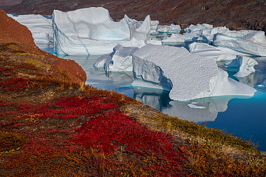 Icebergs and autumn tundra near Rode O (Red Island) in Rode Fjord (Red Fjord), Scoresby Sund, Greenland, August.