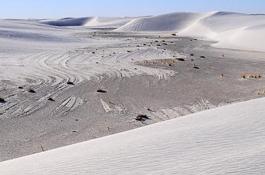 Gypsum sand dunes, White Sands National Park, Chihuahuan Desert, New Mexico, USA, December 2012.