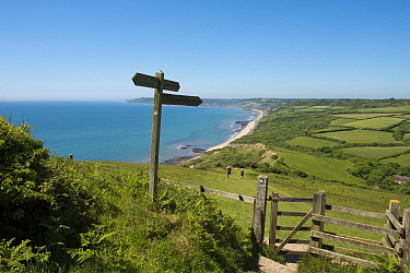 Southwest coast path through National Trust's Golden Cap Estate, looking west towards Charmouth. Lyme Bay, Dorset, England, UK. May 2017.