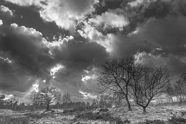 Stormy sky over Klein Schietveld, Brasschaat, Belgium. March 2019.