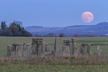 Supermoon rising over Stonehenge Wiltshire, the biggest Supermoon in 68 years and the closest since 1948. 13th November 2016.