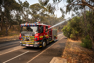 Firefighters from Melbourne's Metropolitan Fire Brigade (MBF) try and help cool down Melbourne's Yarra Bend Grey-headed Flying-fox (Pteropus poliocephalus) colony by spraying water on them.  Par...