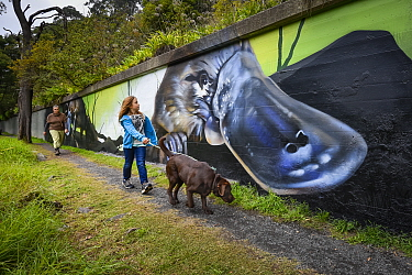 This mural next to the Yarra River which is a local hotspot for Platypus, and forms part of a broader 3 year 'Communities for Platypus program' in the area. Warburton, Victoria, Australia. Jun...