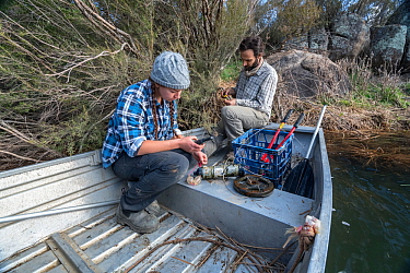 Platypus (Ornithorhynchus anatinus) researchers preparing radio receivers to be placed into the river and help track the movement of platypus which have had transponders attached. Dalgety, NSW, Austra...