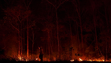 A member of the Angledale Rural Fire Service brigade lights up a backburn to protect the edge of Bermagui township, New South Wales, Australia. January 2020.