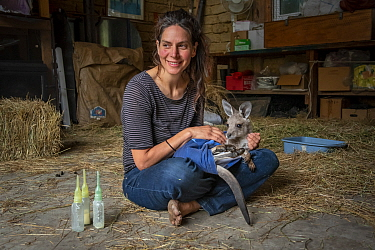 Rena Gaborov feeding some of her eastern grey kangaroo (Macropus giganteus) orphans in her mother's shed. Rena and her partner Joseph had to evacuate their wildlife (wombats, possums and kangaroos) fr...