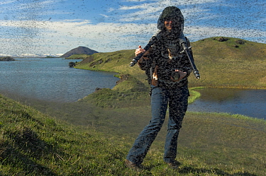Photographer Orsolya Haarberg surrounded by swarming Midges (Chironomus islandicus) Myvatn, Iceland, June 2008, model released