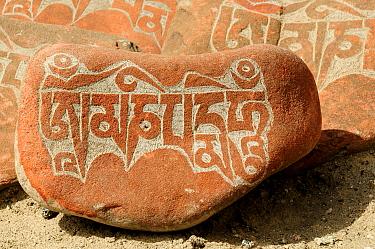 Mani stone - sacred Buddhist prayers engraved on rocks, Thikshey Monastery, Ladakh, India. September 2011.