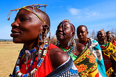 Group of Maasai women singing and dancing in traditional dress and adorned with bead work, Masai Mara National Reserve, Kenya.