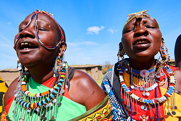 Maasai women singing and dancing in traditional dress and adorned with bead work, Masai Mara National Reserve, Kenya.