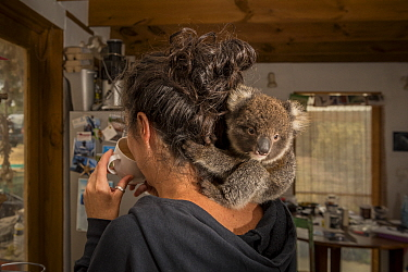 ?Portrait of Kate Welz, a veterinary nurse, wildlife carer and president of the Kangaroo Island Wildlife Network with Piccolo, a rescued baby Koala (Phascolarctos cinereus). American River, Kangaroo I...