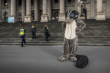 ?A protester dressed as a Greater glider (Petauroides volans) from GECO (Goongerah Environment Centre Office) protesting against logging in East Gippsland on the steps of the Victorian Parliament, Mel...