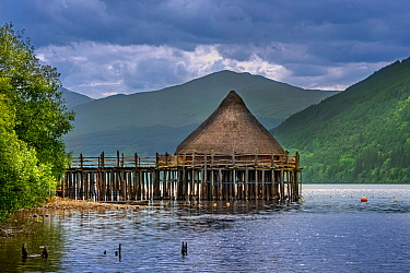 Reconstructed 2500 year old crannog, prehistoric dwelling at the Scottish Crannog Centre on Loch Tay near Kenmore, Perth and Kinross, Scotland, UK. June 2018
