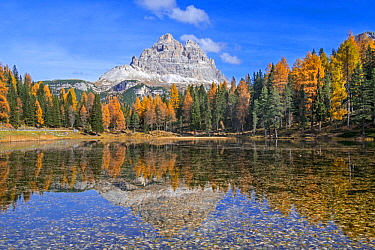 Mountain Drei Zinnen and larch trees reflected in water of Lake Lago d'Antorno in the Tre Cime Natural Park in autumn, Dolomites, South Tyrol, Italy, October