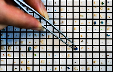In 5mm squares micro-pastics are sorted by a scientist. The sample was taken in International Waters in an area of the Atlantic Ocean known as the Sargasso Sea.