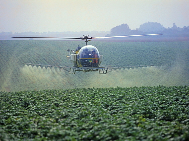 Bell helicopter spraying a potato crop with trace element fertilizer and a fungcide against late blight, Hampshire