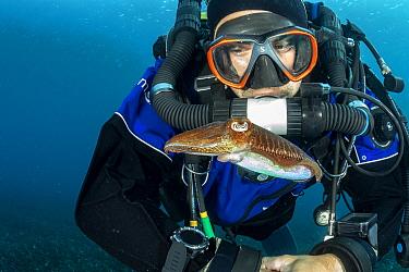 Rebreather diver and Common Cuttlefish, (Sepia officinalis), in shallow water in front Komiza beach dive site, Vis Island, Croatia, Adriatic Sea, Mediterranean