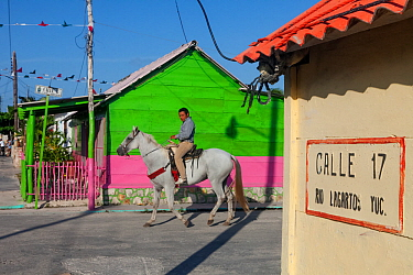 Man riding house past houses in Rio Lagartos, Yucatan Peninsula, Mexico, July