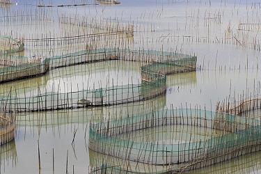 Fish farm with bamboo enclosures, Xiapu County, Fujiang Province, China