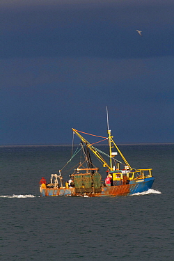 Inshore trawler in shallow coastal sea fishing area off County Wicklow, Ireland, June.