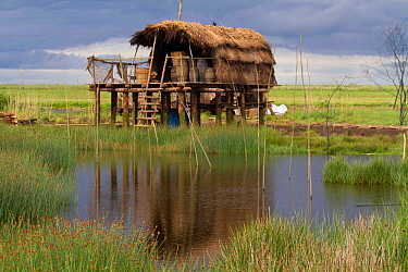Viking style building made for filming the TV Series 'The Vikings' built in Kilcoole Marsh , habitat for Little terns (Sterna albifrons) Ireland, June.