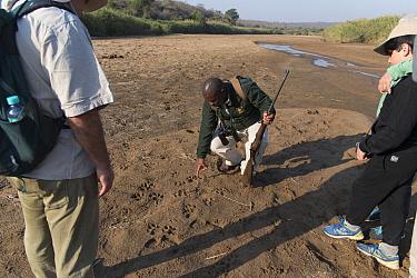Game ranger looking at animal tracks, Hluluwe-Imfolosi Park, Kwazulu Natal, South Africa