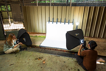 Behind the scenes for Wild Wonders of China at Night Safari, Singapore. A studio background and lights set up near the Sunda pangolin facilities. Photographer Suzi Eszterhas on the left, Night Safari...