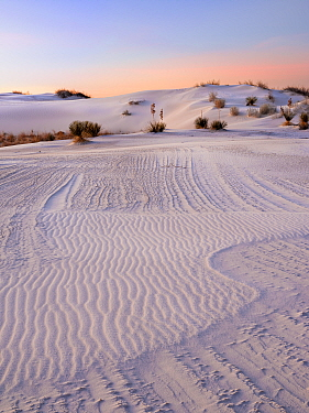 Striated texture in white gypsum sand dunes, created by wind and moisture laden dunes. White Sands National Monument, New Mexico. USA. December.