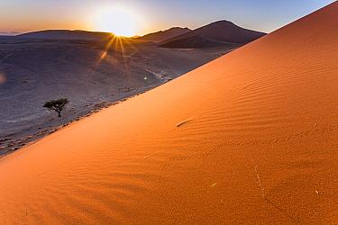Red sand dunes in the Namib Desert. Dune #45, Sossuvlei, Namibia