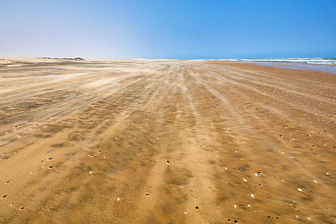 Strong winds over a wild beach, Northern Skeleton Coast National Park, Namibia, Atlantic coast.
