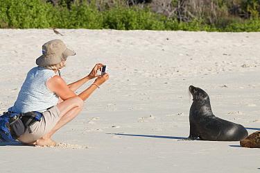 Tourist taking picture of Galapagos sea lion (Zalophus wollebaeki) Gardner Bay, Espanola (Hood) Island, Galapagos. June 2008.