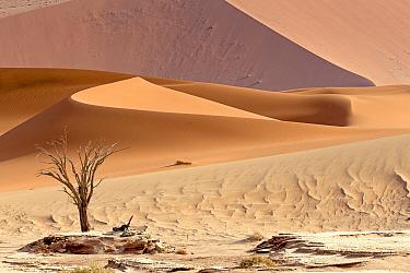 Sossusvlei dunes, Namib Naukluft Park, Namib Desert, Namibia