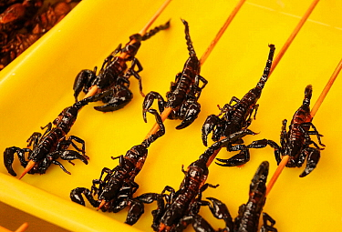 Scorpion skewers ready to eat. Open-air food market in central Beijing, China.