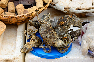 Dried chameleons for sale at Dantopka Great Market, Cotonou, Benin, West Africa. The chameleons are used for voodoo ceremonies.