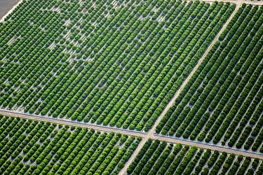Citrus orchard, aerial view. McAllen, Hidalgo County, Texas, USA.