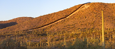 Border wall between United States and Mexico through Sonoran Desert with Saguaro (Carnegiea gigantea) cacti, in morning light. Organ Pipe Cactus National Monument, Arizona, USA. May 2019.