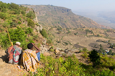 Two Ethiopians looking down into valley at Gelada baboon (Theropithecus gelada) group of females with young and a male. Near cliff where Baboons spend the night. Debre Libanos, Rift Valley, Ethiopia....