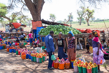 Market stalls at side of road with tomatoes, onions and watermelons for sale. Debre Libanos market, Rift Valley, Ethiopia. 2017.