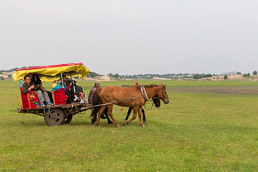 Group of tourists in horse drawn cart. Bashang Grassland, near Zhangjiakou, Hebei Province, Inner Mongolia, China. July 2018.