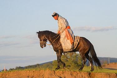 Mongol man in traditional dress riding horse. Bashang Grassland, near Zhangjiakou, Hebei Province, Inner Mongolia, China. 2018.
