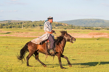 Mongol man in traditional dress riding horse, hills of Bashang Grassland in background. Near Zhangjiakou, Hebei Province, Inner Mongolia, China. July 2018.