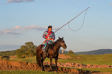 Mongol man in traditional dress on horse, holding stick to herd and catch livestock. In evening light with hills of Bashang Grassland in background. Near Zhangjiakou, Hebei Province, Inner Mongolia, C...