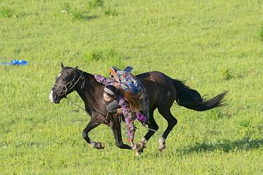 Mongol woman in traditional dress riding horse, in demonstration for tourists. Bashang Grassland, near Zhangjiakou, Hebei Province, Inner Mongolia, China. 2018.